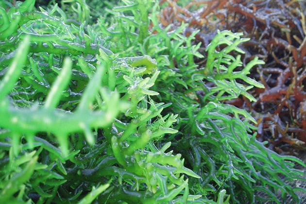 Bổ sung tinh chất mầm tảo cho da láng mịn tại Hà Nội Smile Spa