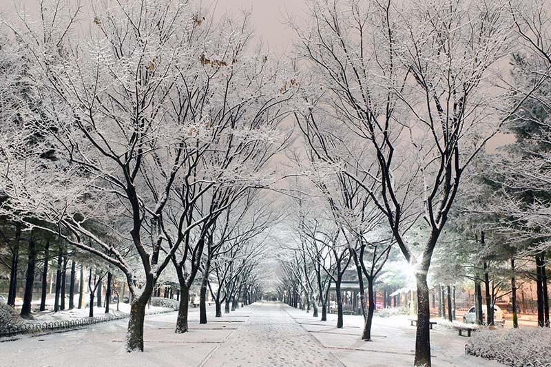 Hàn Quốc mùa thu: Hà Nội - Seoul - Đảo Nami - Everland (5N4Đ)