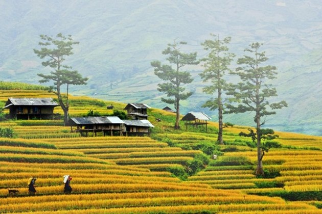 Image result for tour hà nội fansipan